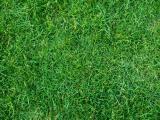 Grasz w zielone?