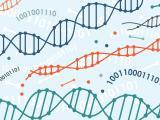 Neuropatologie chorób psychiatrycznych a genetyka